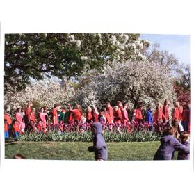 Boston Public Garden, Red Flowers (from the series Selected People)