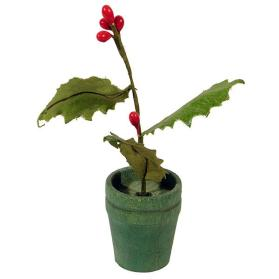 Miniature Holly Plant