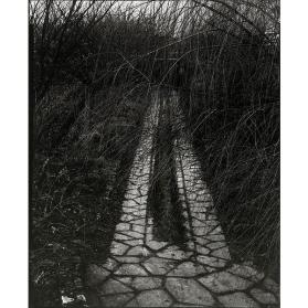 Driveway, Orgeval (from Portfolio Two: The Garden)
