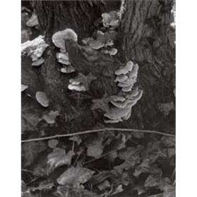 Fungus, Orgeval (from Portfolio Two: The Garden)